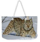 Eurasian Lynx  In Snow Weekender Tote Bag