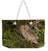 European Scops Owl  Weekender Tote Bag