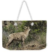 Ewe 1 Weekender Tote Bag