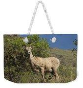Ewe 3 Weekender Tote Bag