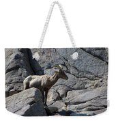Ewe Bighorn Sheep Weekender Tote Bag