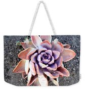 Exotic Succulent Plant - Pink Lilac Weekender Tote Bag