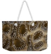 Extreme Close-up Of A Crust Anemone Weekender Tote Bag