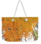 Fall Color Maple Leaves At The Forest In Aichi, Nagoya, Japan Weekender Tote Bag
