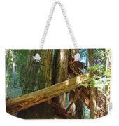 Fallen Redwood Trees Forest Weekender Tote Bag