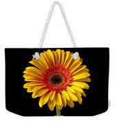 Fancy Daisy In Stripped Vase  Weekender Tote Bag