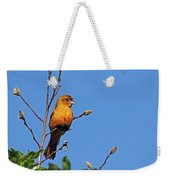 Female Baltimore Oriole Weekender Tote Bag