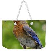 Female Bluebird Feeding Her Brood Weekender Tote Bag