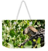 Female Cooper's Hawk Feeding Weekender Tote Bag