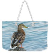 Female Mallard At The River Weekender Tote Bag
