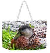 Female Mallard Duck Resting 4 Weekender Tote Bag