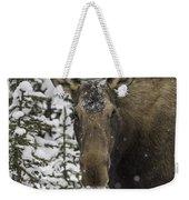 Female Moose In A Winter Wonderland Weekender Tote Bag