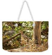 Female Ring-necked Pheasant - Phasianus Colchicus Weekender Tote Bag