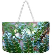 Fern Art Prints Green Sunlit Forest Ferns Giclee Baslee Troutman Weekender Tote Bag