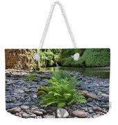 Ferns Along Banks Of Eagle Creek Weekender Tote Bag