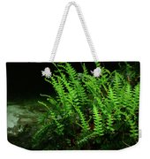 Ferns On The West Virginia At Weekender Tote Bag