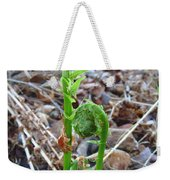 Fiddlehead Ferns In Spring Weekender Tote Bag