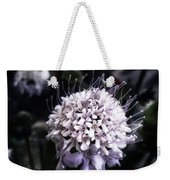 Field Scabious. A Member Of The Weekender Tote Bag