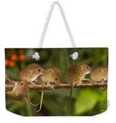 Five Eurasian Harvest Mice Weekender Tote Bag
