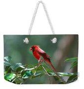 Florida Cardinal Weekender Tote Bag