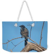 Florida Scrub Jay Watching The Lay Of The Scrub Weekender Tote Bag