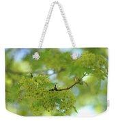 Flowering Maple Tree Weekender Tote Bag