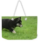 Fluffy Alusky Puppy Stalking In Green Grass Weekender Tote Bag