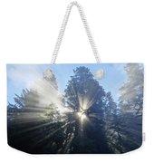Foggy Redwood Sunrise Weekender Tote Bag