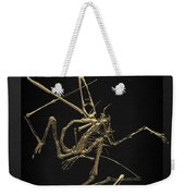 Fossil Record - Gold Pterodactyl Fossil On Black Canvas #1 Weekender Tote Bag