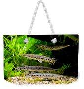 Four Aquarium Fishes In Zoo Weekender Tote Bag