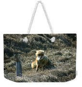 Fox In The Wind Weekender Tote Bag