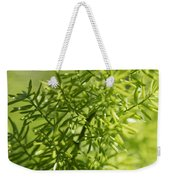 Foxtail Fern In Spring Weekender Tote Bag