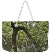 Funky Tree On Trail In Peters Canyon Weekender Tote Bag