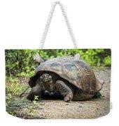 Galapagos Giant Tortoise Walking Down Gravel Path Weekender Tote Bag