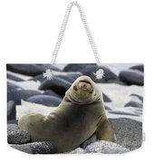 Galapagos Sea Lion Weekender Tote Bag