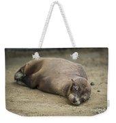Galapagos Sea Lion Sleeps On Sandy Beach Weekender Tote Bag