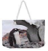 Gentoo Penguin Chick Under Whale Vertebrae Weekender Tote Bag