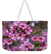 Geraldton Wax Flowers, Cwa Pink - Australian Native Flower Weekender Tote Bag