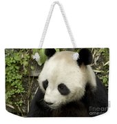 Giant Panda At Rest Weekender Tote Bag