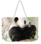 Giant Panda Bear Leaning Against A Tree Trunk Eating Bamboo Weekender Tote Bag