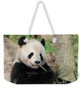 Giant Panda Bear Lounging On Against Tree Trunk Weekender Tote Bag