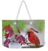 Give Me Shelter - Male Cardinal Weekender Tote Bag by Kerri Farley