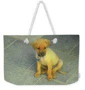 Golden Cunucu Puppy In Aruba Weekender Tote Bag
