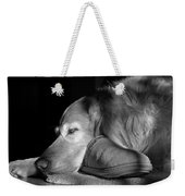 Golden Retriever Dog With Master's Slipper Black And White Weekender Tote Bag by Jennie Marie Schell