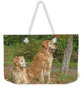 Golden Retriever Dogs In Autumn Weekender Tote Bag