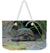 Gopher Tortoise II Weekender Tote Bag