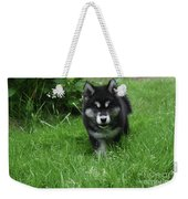 Gorgeous Alusky Puppy Dog Creeping Through Grass Weekender Tote Bag