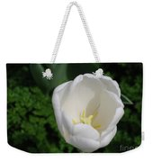 Gorgeous Blooming White Tulip Flower Blossom In Spring Weekender Tote Bag
