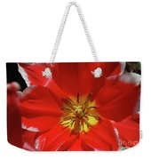 Gorgeous Flowering Red Tulip With A Yellow Center Weekender Tote Bag