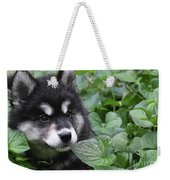 Gorgeous Fluffy Alusky Puppy Peaking Out Of Plants Weekender Tote Bag